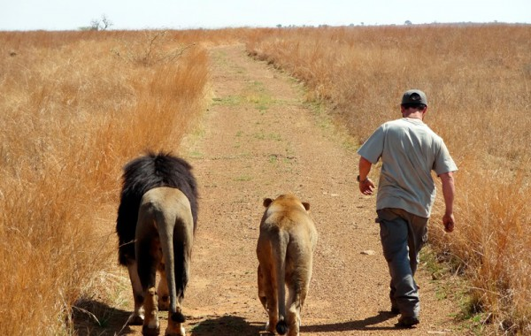 Lion canned hunting, the person behind the 'Hunter'